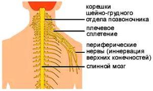 Брахиалгия и нервы
