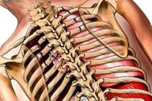 травма груди