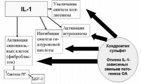 Как работает хондроитинсульфат