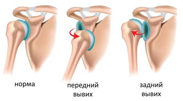 анатомия ключицы