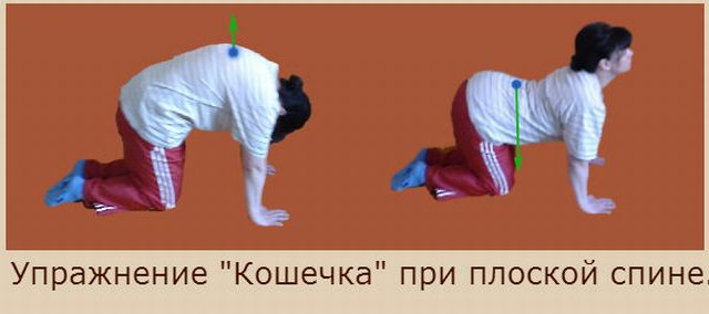 упражнение кошечка