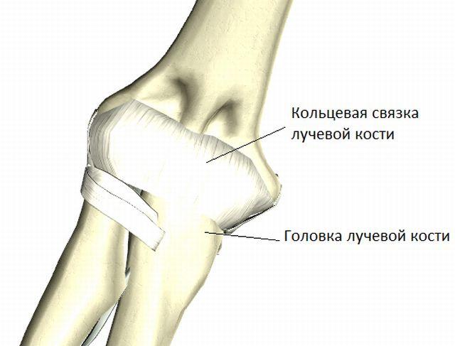 цилиндрический сустав