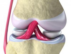 связки коленного сустава