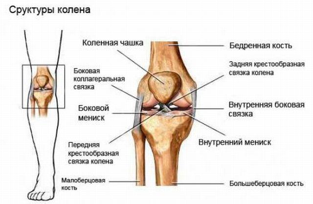 Изображение - Отекают выше колена сустав в норме strukturakolena