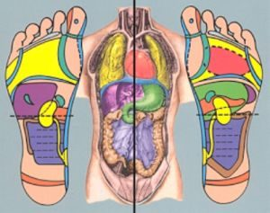соответствие точек на ногах органам