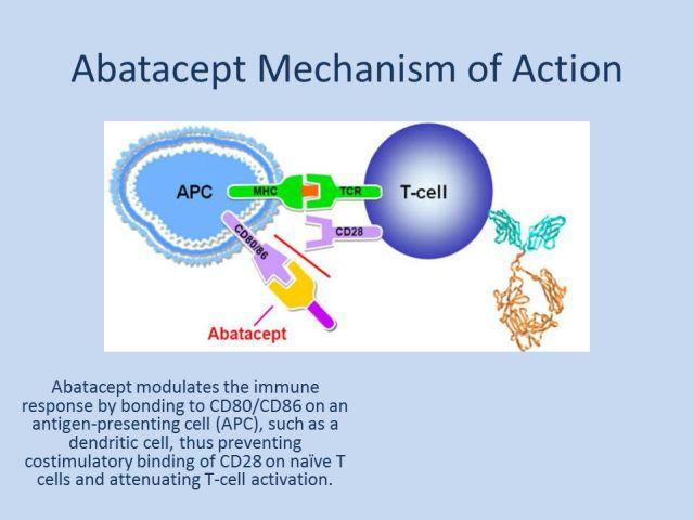 Как работает абатацепт